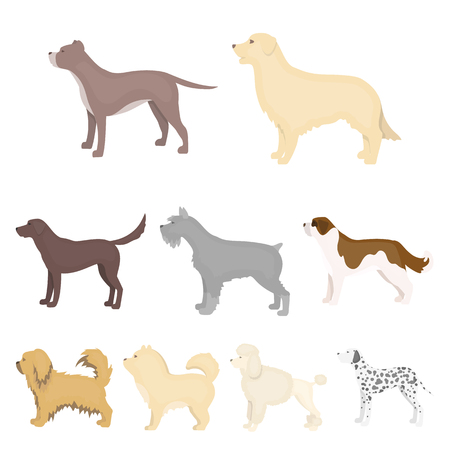 dalmatian: Dog breeds set icons in cartoon style. Big collection of dog breeds vector symbol stock