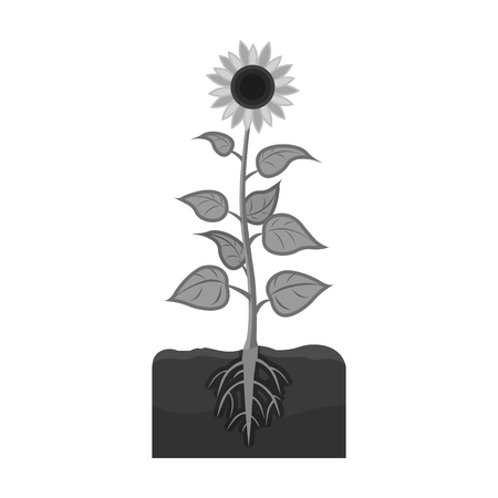 peasant: Sunflower, single icon in monochrome style.Sunflower vector symbol stock illustration web.