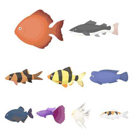 Big collection of aquarium fish vector symbol stock illustration