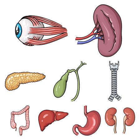 Big collection of human organs vector symbol stock illustration 向量圖像