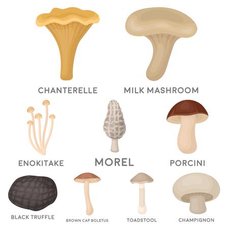 Mushroom set icons in cartoon style. Big collection of mushroom vector symbol stock illustration