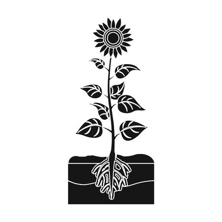 peasant: Sunflower single icon in black style. Illustration