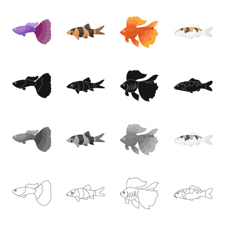 guppies: Different types of aquarium and marine fish, guppies, gold. A fish set collection icons in cartoon black monochrome outline style vector symbol stock illustration web. Illustration