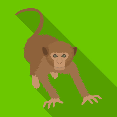 Monkey, wild animal of the jungle. Monkey, mammal primate single icon in flat style vector symbol stock illustration web. Иллюстрация