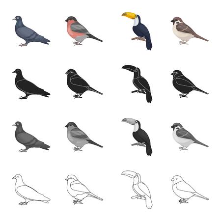 鳩、歌ウソ、熱帯の鳥、トゥカン、小さな軌道。鳥は漫画白黒黒のアウトライン スタイル ベクトル シンボル ストック イラストでコレクションのア