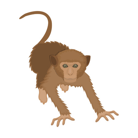 Monkey, wild animal of the jungle. Monkey, mammal primate single icon in cartoon style vector symbol stock illustration .
