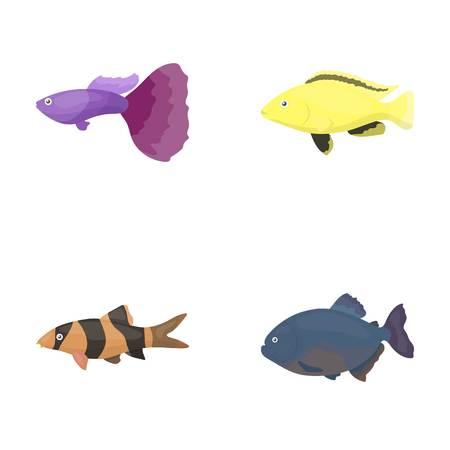 Botia, clown, piranha, cichlid, hummingbird, guppy,Fish set collection icons in cartoon style vector symbol stock illustration .