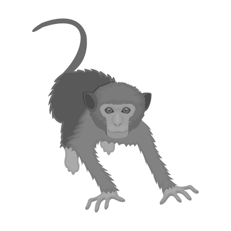 Monkey, wild animal of the jungle. Monkey, mammal primate single icon in monochrome style vector symbol stock illustration web.