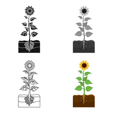 peasant: Sunflower, single icon in cartoon style.Sunflower vector symbol stock illustration web.