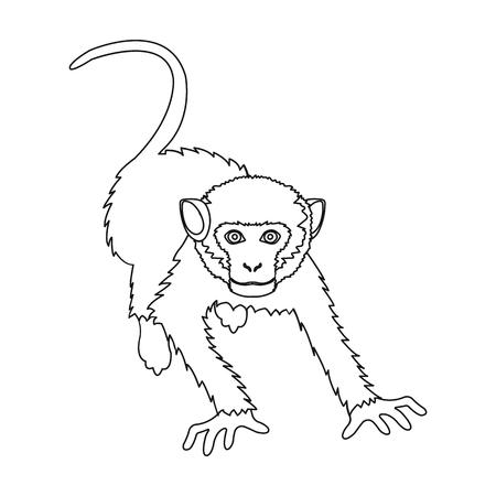 Monkey, wild animal of the jungle. Monkey, mammal primate single icon in outline style vector symbol stock illustration web.