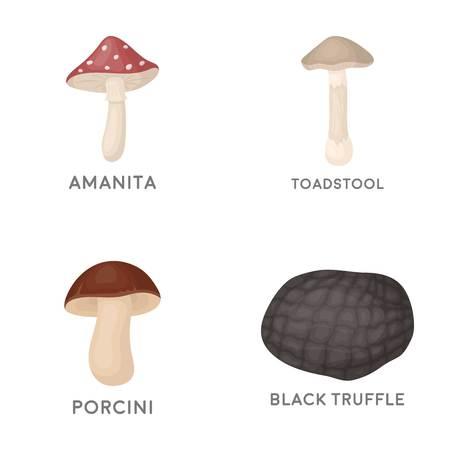 Amanita, porcini, black truffle,toadstool.