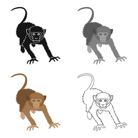 Monkey, mammal primate single icon in cartoon style vector symbol stock illustration web.