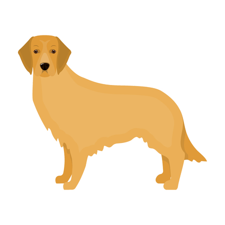 Retriever single icon in cartoon style.Retriever vector symbol stock illustration web.