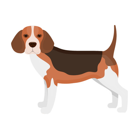 Beagle,single icon in cartoon style.Beagle, vector symbol stock illustration web. Illustration