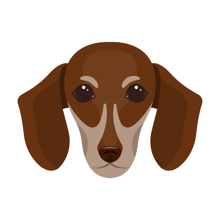 Dog, breed dachshund.Muzzle of the dachshund single icon in cartoon style vector symbol stock illustration web. Illustration
