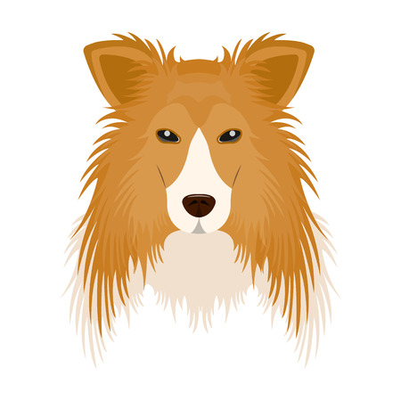Dog, Collie breed, Scottish Shepherd. Muzzle Collie single icon in cartoon style vector symbol stock illustration web. Illustration