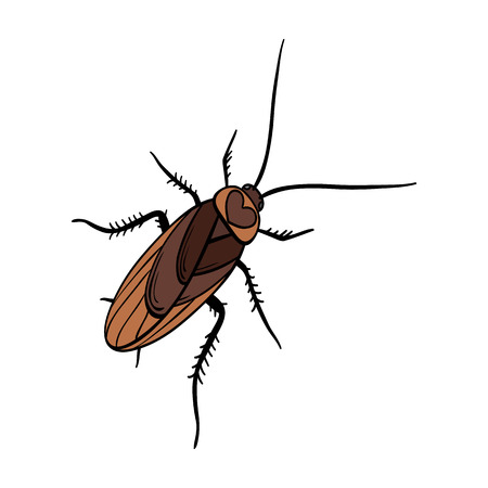 A mustachioed cockroach. Arthropod insect, cockroach single icon in cartoon style vector symbol stock isometric illustration web.