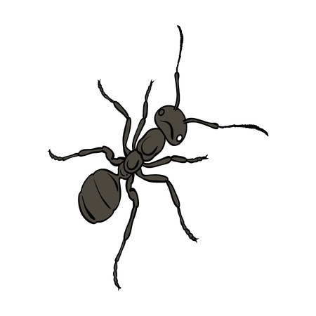 The hymenopteran insect is an ant.Arthropod animal ant single icon in cartoon style vector symbol stock isometric illustration web.