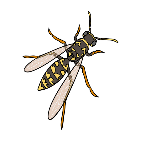 Wasp, hymenopteran insect.Wasp, stinging insect single icon in cartoon style vector symbol stock isometric illustration web. Illustration