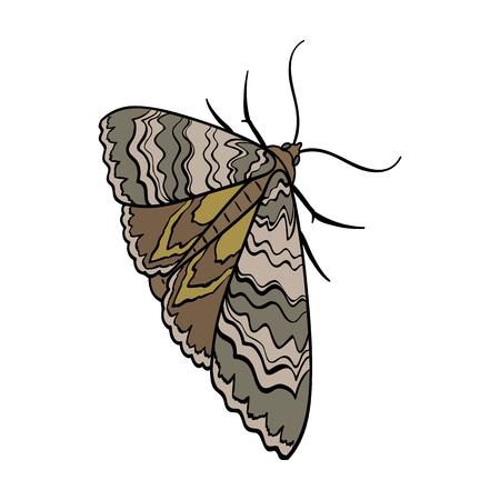 Motte, Nachtschmetterling. Einzelne Ikone der Insektenschädlingsmotte im isometrischen Illustrationsnetz des Karikaturartvektorsymbolvorrates auf Lager.