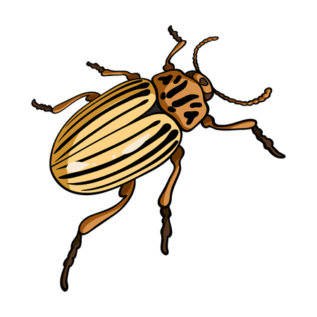 coleoptera: Colorado beetle, a coleopterous insect.Colorado, a harmful insect single icon in cartoon style vector symbol stock isometric illustration web.