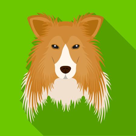 Dog, Collie breed, Scottish Shepherd. Muzzle Collie single icon in flat style vector symbol stock illustration web. Illustration