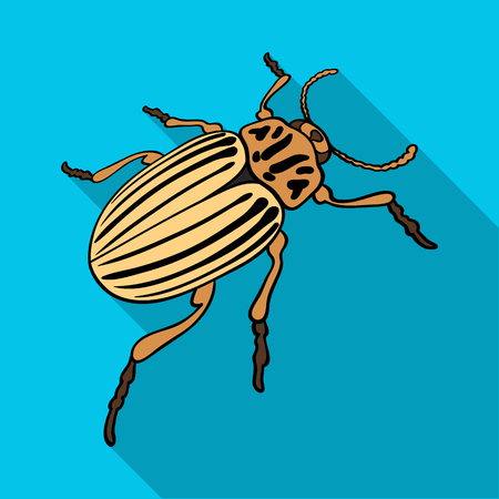 Colorado bug, a coleopterous insect.Colorado, a harmful insect single icon in flat style vector symbol stock isometric illustration web. Çizim