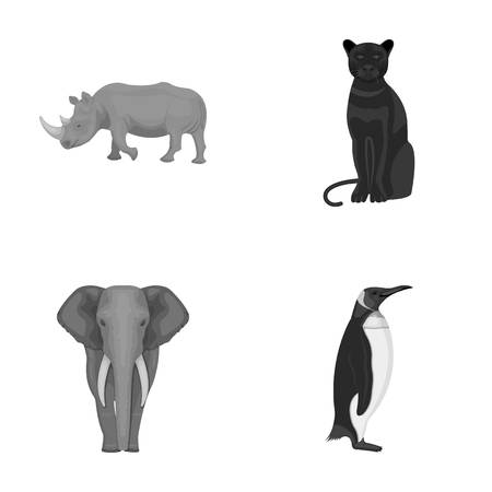 Black rhinoceros, panther wild cat, African animal elephant, imperial penguin. Wild animals set collection icons in monochrome style vector symbol stock illustration web.