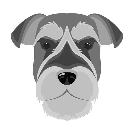 A breed of a dog, a risen schnauzer.Risen Schnauzer Muzzle single icon in monochrome style vector symbol stock illustration web.