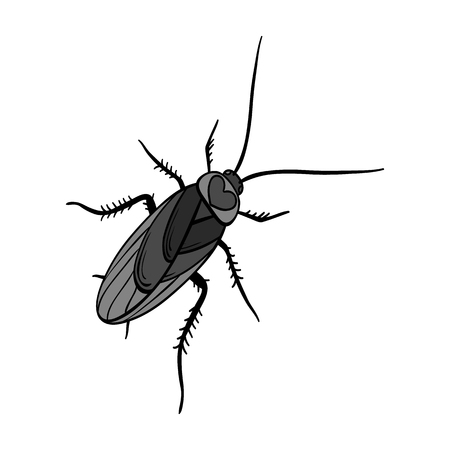 A mustachioed cockroach. Arthropod insect, cockroach single icon in monochrome style vector symbol stock isometric illustration web.