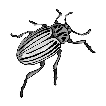 coleoptera: Colorado beetle, a coleopterous insect.Colorado, a harmful insect single icon in monochrome style vector symbol stock isometric illustration web. Illustration