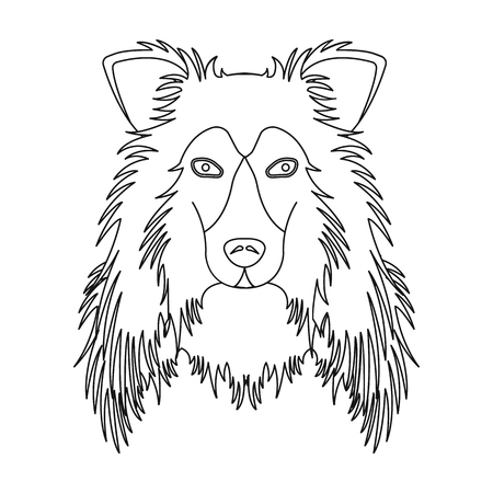 Dog, Collie breed, Scottish Shepherd. Muzzle Collie single icon in outline style vector symbol stock illustration web.