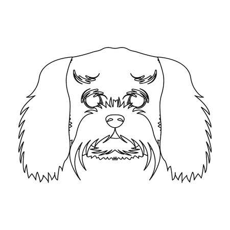 Breed of a dog, a lapdog.Muzzle of a lapdog single icon in outline style vector symbol stock illustration . Illustration