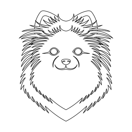 Breed of a dog, spitz.Muzzle Spitz single icon in outline style vector symbol stock illustration .
