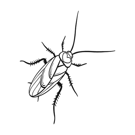 A mustachioed cockroach. Arthropod insect, cockroach single icon in outline style vector symbol stock isometric illustration web.