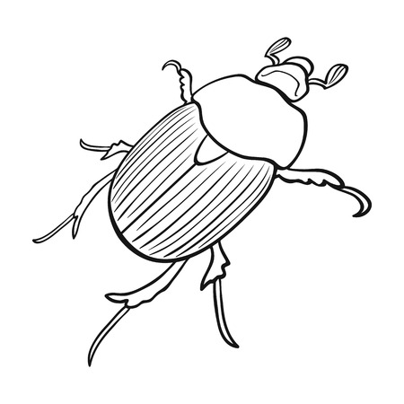 coleoptera: Beetle is a coleopterous insect.Arthropods insect, beetle single icon in outline style vector symbol stock isometric illustration web.