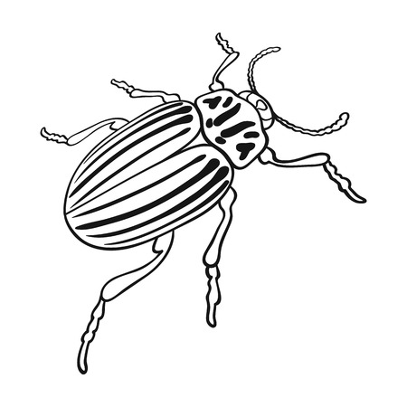 Colorado beetle, a coleopterous insect.Colorado, a harmful insect single icon in outline style vector symbol stock isometric illustration web.