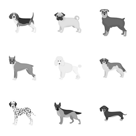 hounds: Dachshund, laika, poodle and other  icon in monochrome style.Boxer, rottweiler, bulldog, icons in set collection