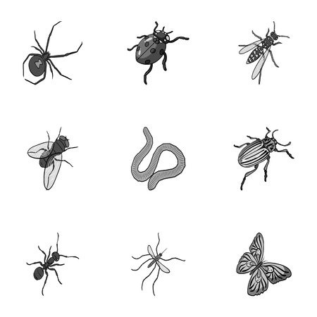 wasp, bee, ant, fly, spider, mosquito and other insect species. Various insects set collection icons in monochrome style vector symbol stock isometric illustration .