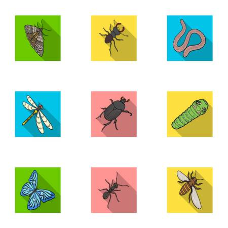wasp, bee, ant, fly, spider, mosquito and other insect species. Various insects set collection icons in flat style vector symbol stock isometric illustration .