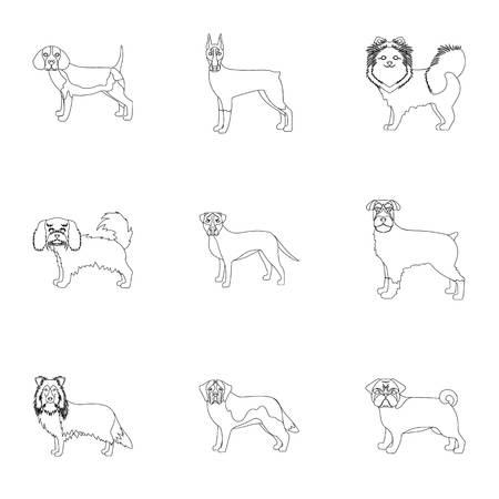 hounds: Dachshund, laika, poodle and other  icon in outline style.Boxer, rottweiler, bulldog, icons in set collection