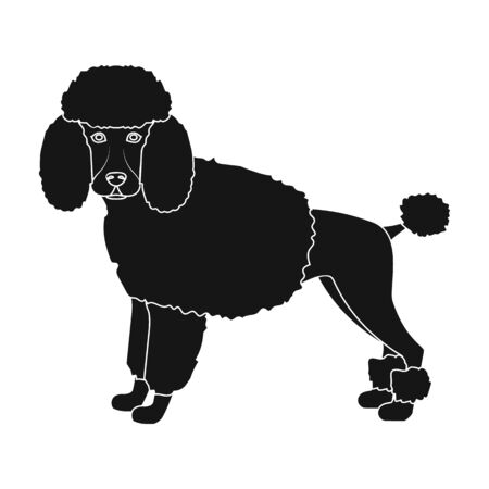 hounds: Poodle, single icon in black style.Poodle, vector symbol stock illustration .