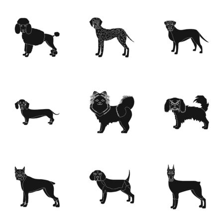 hounds: Dachshund, laika, poodle and other  icon in black style.Boxer, rottweiler, bulldog, icons in set collection