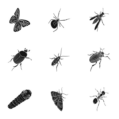 wasp, bee, ant, fly, spider, mosquito and other insect species. Various insects set collection icons in black style vector symbol stock isometric illustration .