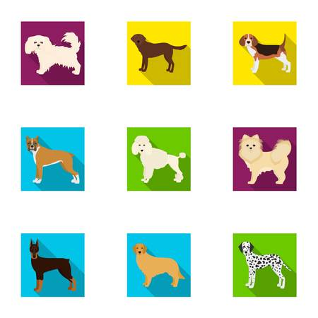 hounds: Dachshund, laika, poodle and other  icon in flat style.Boxer, rottweiler, bulldog, icons in set collection