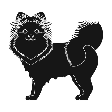 hounds: Spitz single icon in black style.Spitz vector symbol stock illustration .