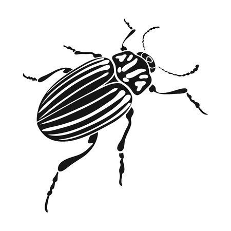 coleoptera: Colorado a coleopterous insect.Colorado, a harmful insect single icon in black style vector symbol stock isometric illustration .