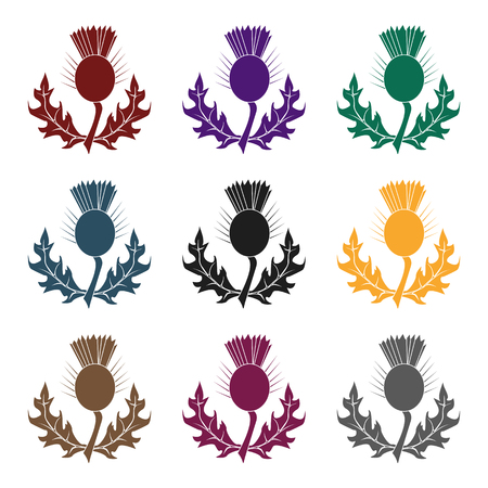 Thistles with green leaves.Medicinal plant of Scotland.Scotland single icon in black style vector symbol stock  illustration. Illustration