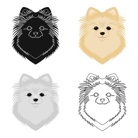 Breed of a dog, spitz.Muzzle Spitz single icon in cartoon style vector symbol stock illustration .
