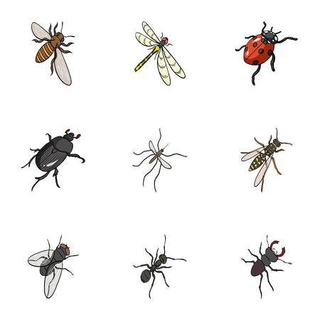 ladybug: wasp, bee, ant, fly, spider, mosquito and other insect species. Various insects set collection icons in cartoon style vector symbol stock isometric illustration . Illustration